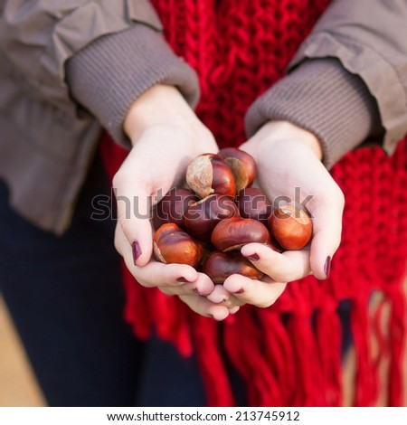 Girl holding many chestnuts in her hands - stock photo