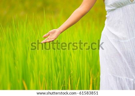 Girl in white dress let her hand touch rice leafs - stock photo