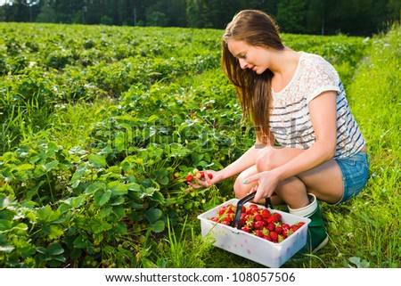 Girl inspect strawberries on field and she pick ripe ones to the basket