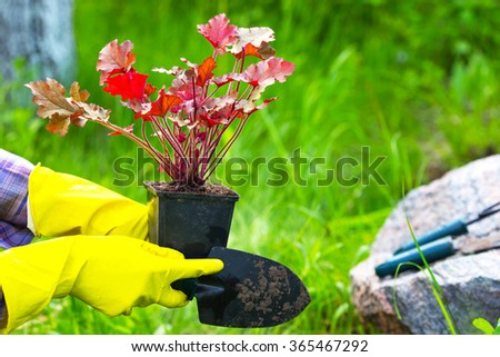 Girl is engaged in planting flowers in the garden - stock photo