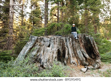 girl on giant stump in Sequoia National Park in USA - stock photo