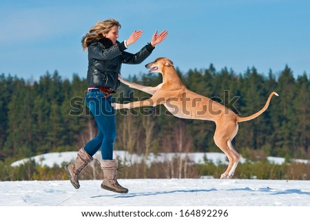 Girl playing with greyhound in winter - stock photo
