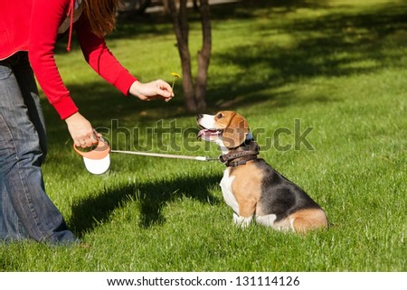 Girl playing with her  dog in autumn park - stock photo