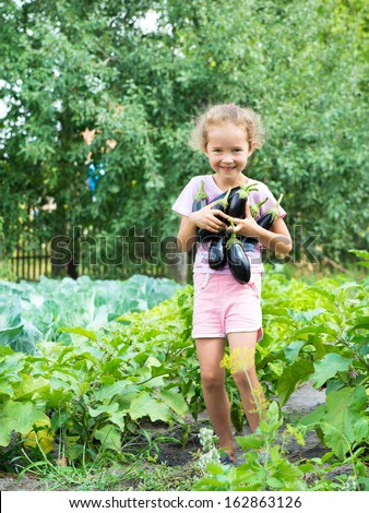 Girl with eggplant. Little girl harvesting eggplant.