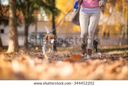 Girl with her Beagle dog jogging in park - stock photo