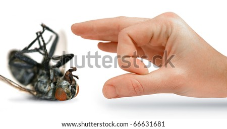 Give Pests The Flick With An Isolated Hand Flicking A Huge Dead Fly - stock photo