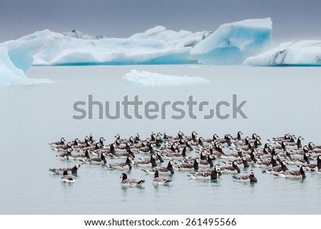 Glacier Lagoon in east Iceland - stock photo