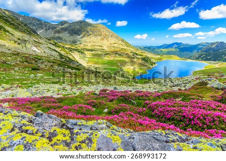 Glacier lake,high mountains and stunning pink rhododendron flowers,Retezat National Park,Carpathians,Romania,Europe - stock photo