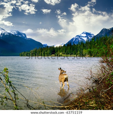 Glacier National Park, USA, UNESCO - stock photo