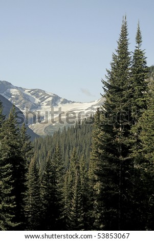 Glacier with clear blue sky and tall pines in foreground. - stock photo