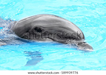 Glad beautiful dolphin smiling in a blue swimming pool water on a clear sunny day  - stock photo