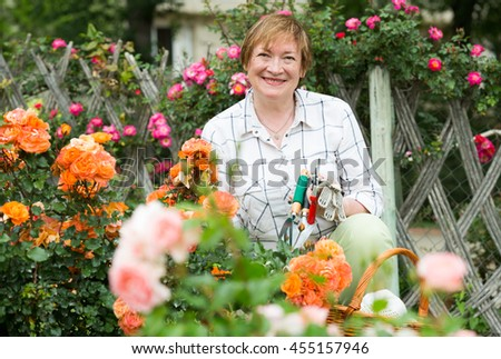 glad mature woman gardener taking care of bush roses outdoors on summer day