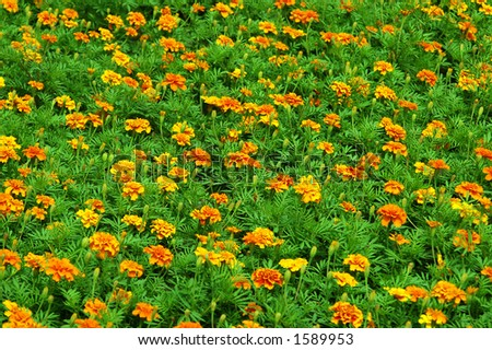 Glade of flowers - stock photo