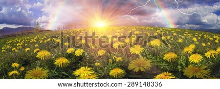 Glade Spring flowers-dandelions under a clear sky with bright clean clouds pleases viewer saturated colors and the freshness of a new day. After the storm and rain especially bright foliage color - stock photo