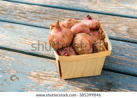 Gladiola corms in a wooden basket. - stock photo
