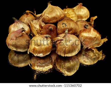 Gladiolus flowers bulbs on a black background with water drops - stock photo