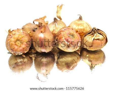 Gladiolus flowers bulbs on a white background with water drops - stock photo