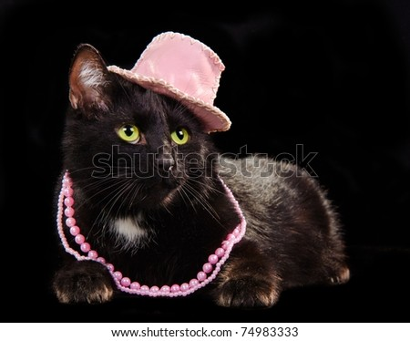 Glamorous black cat wearing pink hat and beads against black background - stock photo