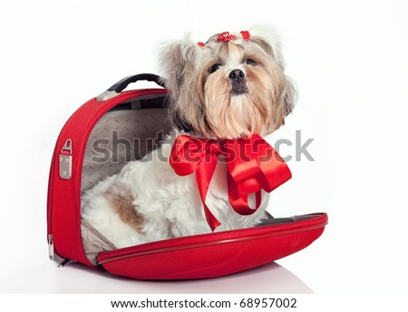 Glamorous dog as a gift in a bag with a bow - stock photo