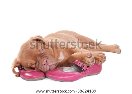 Glamorous 3 months old puppy sleeping sweetly on pink shoes isolated on white background - stock photo