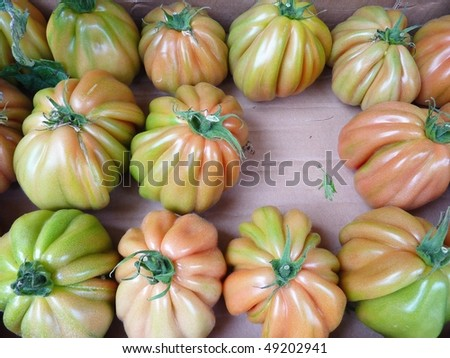 Glass culture tomatoes - stock photo