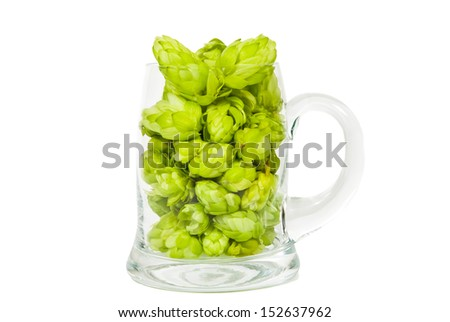 Glass full of green hop cones - stock photo