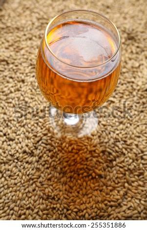 Glass full of light beer standing on barley malt grains - stock photo