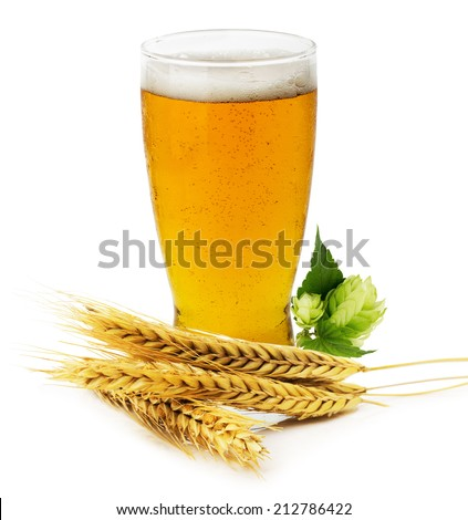 Glass of fresh Beer with green Hops and ears of barley isolated on the white background - stock photo