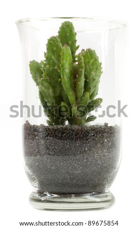 Glass vase with black sand and cactus - stock photo