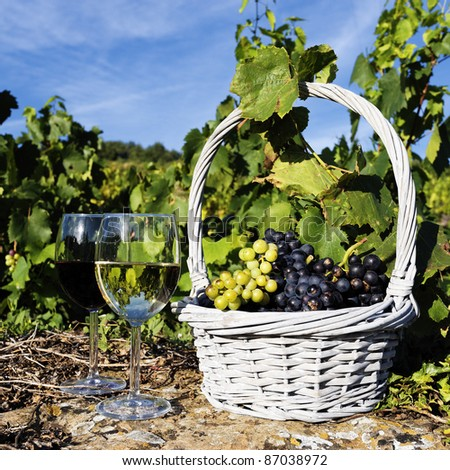 glasses of white and red wine and grappes in basket - stock photo