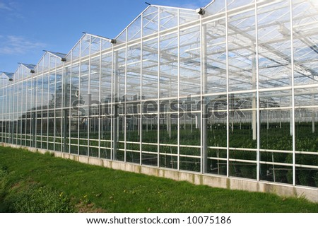 Glasshouse in Holland - stock photo