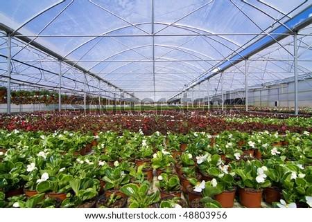 Glasshouse with plants - stock photo