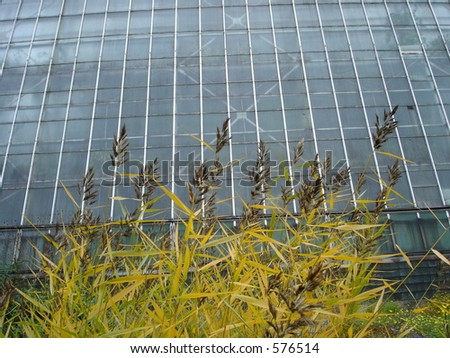 glasshouse with scirpus