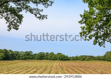 Glimpse on a mown hayfield on a summer day - stock photo