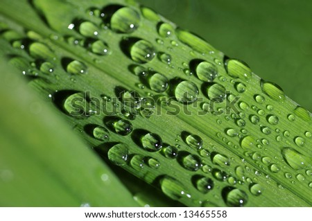 Glittering water droplets shot at night on lush green leaves after an evening rainfall - stock photo