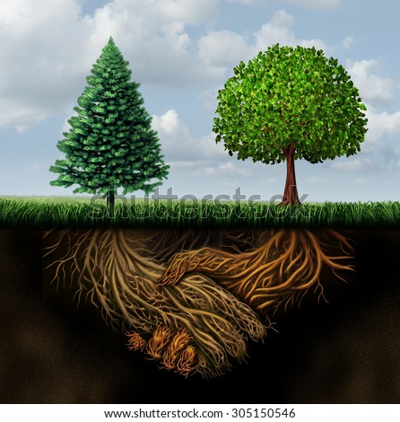 Global agreement shaking hands concept as two different trees from diverse regions showing underground roots coming together in a handshake as a symbol of international cooperation and making a deal. - stock photo