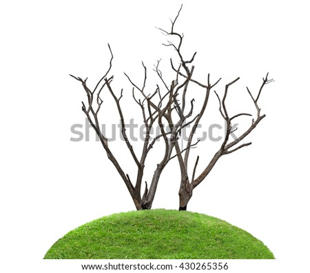 Global warming concept. Dark and burned of dead tree isolated on white background. Wildfires concept. - stock photo