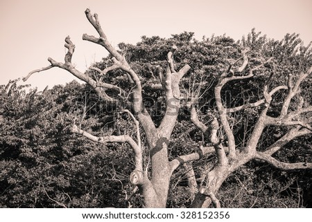 Global warming concept. Lonely dead tree under dramatic tone - stock photo