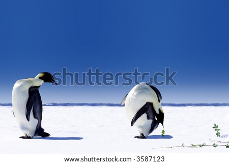 Global warming in Antarctica - stock photo