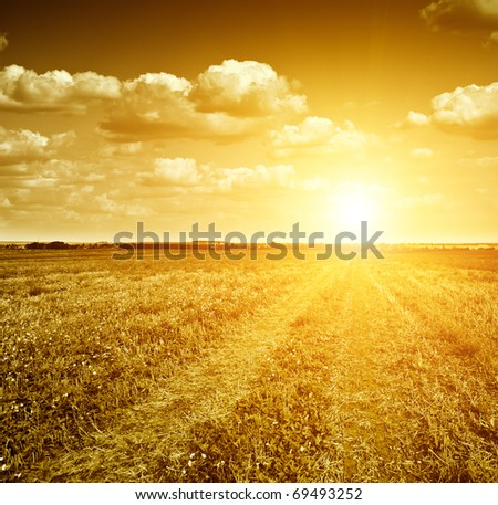 Gloomy dawn in gold field of grass and  rural road. - stock photo