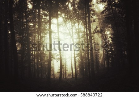 Gloomy forest sunset background. Dark landscape with trees in fog in fantasy woods