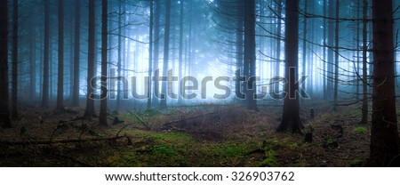 Gloomy panoramic of a dark forest - stock photo
