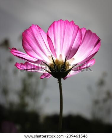 glow flower  - stock photo