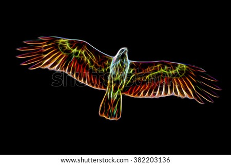 Glow image of Red-backed sea-eagle. (Scientific name - Haliastur indus) - stock photo