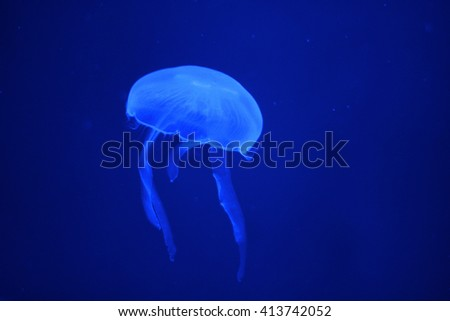 Glowing jellyfish in the dark with blue light - stock photo
