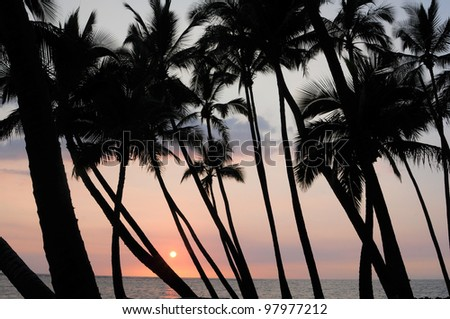 glowing sun above ocean seen through grove of coconut trees - stock photo