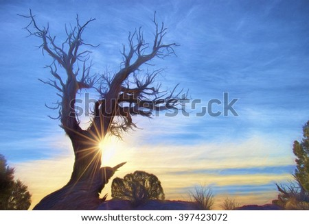 Gnarled Juniper Tree with the Sun Rising Behind It, Taken in Utah