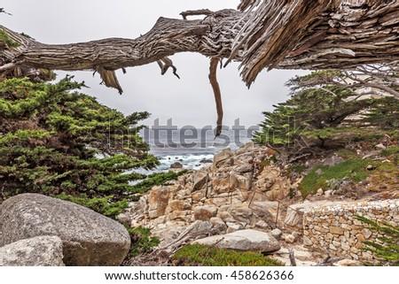 Gnarly, twisted, crooked, Cypress trees surrounded by unusual geological rock formations. In the background are aquamarine seas & stormy skies at 17 Mile Drive, located near Carmel & Monterey CA.