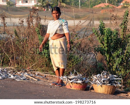 GOA, INDIA - FEB 20, 2008: Indian women collecting fish which was dried right on the ground along the road - stock photo