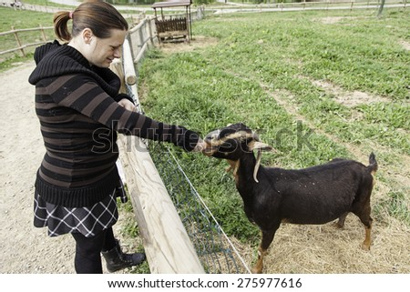Goat eating in rural farm, animals and nature